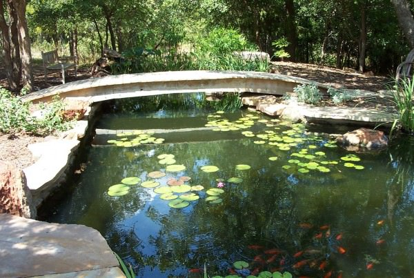 Backyard pond with Japanese-style bridge creates unique water feature